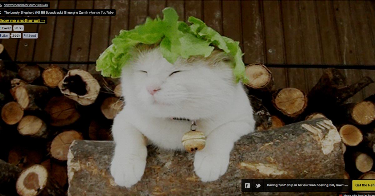 Https Procatinator Com Cat