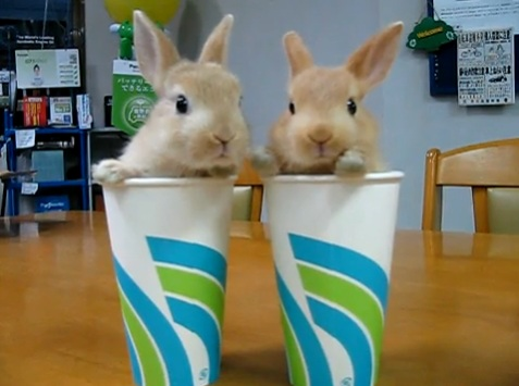 Cute Bunnies in Cups Will Brighten Your Day | Jenny's Noodle