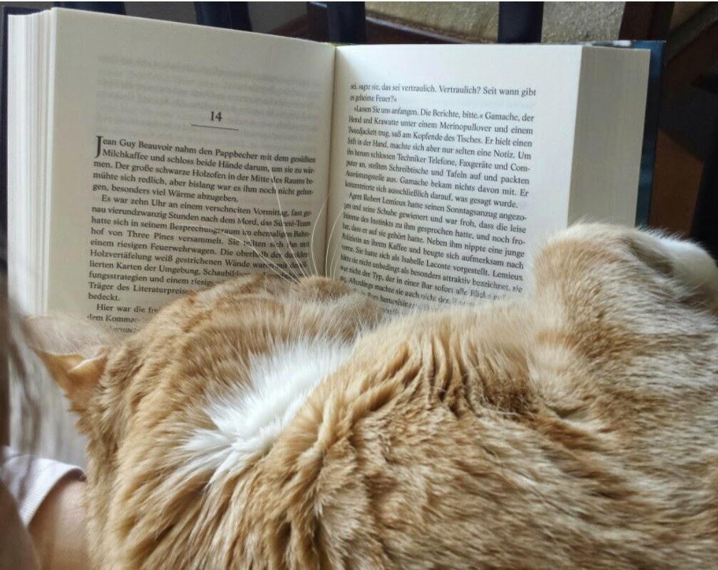 Katze beim Lesen