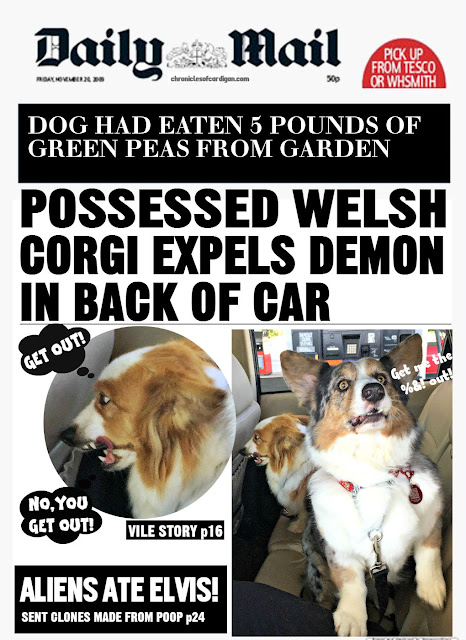 fake tabloid cover headline funny corgi