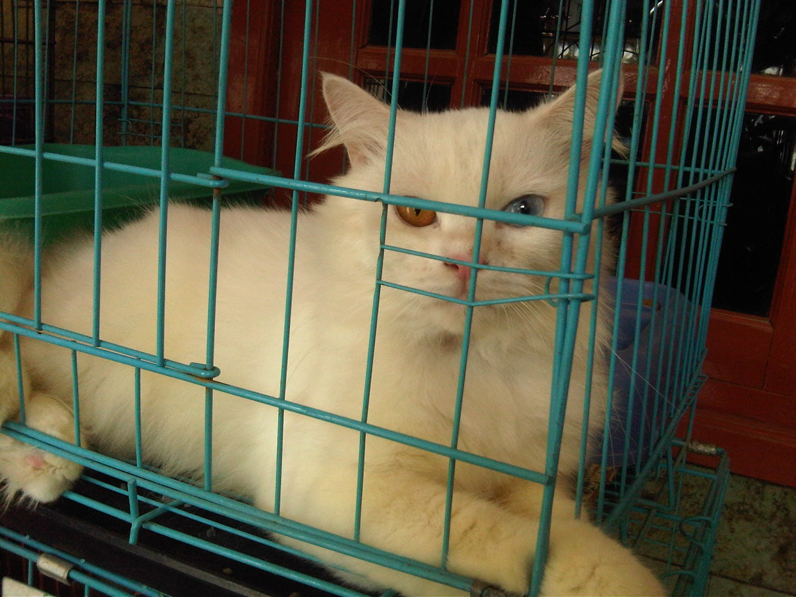 Chesarina S Blog Pecinta Kucing