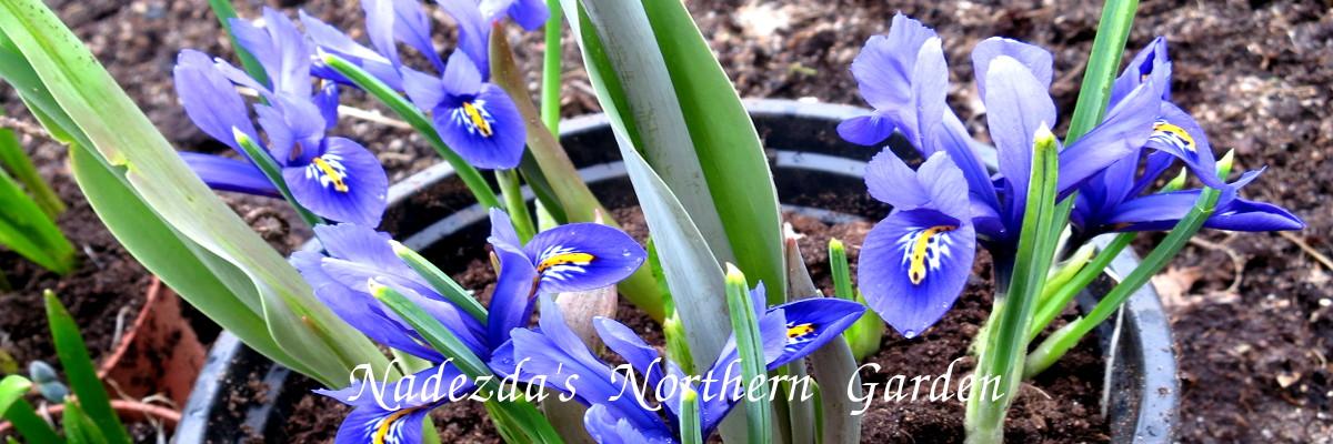 Nadezda's Northern Garden