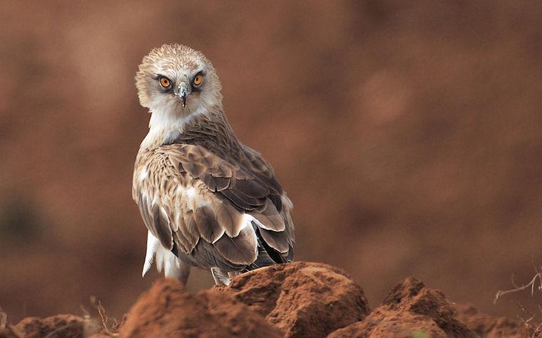 Búho - Owl by Arik-Kaneh