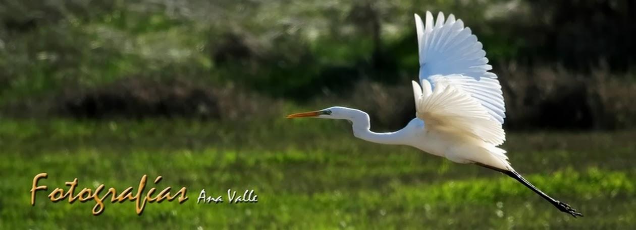 Fotografías Ana Valle