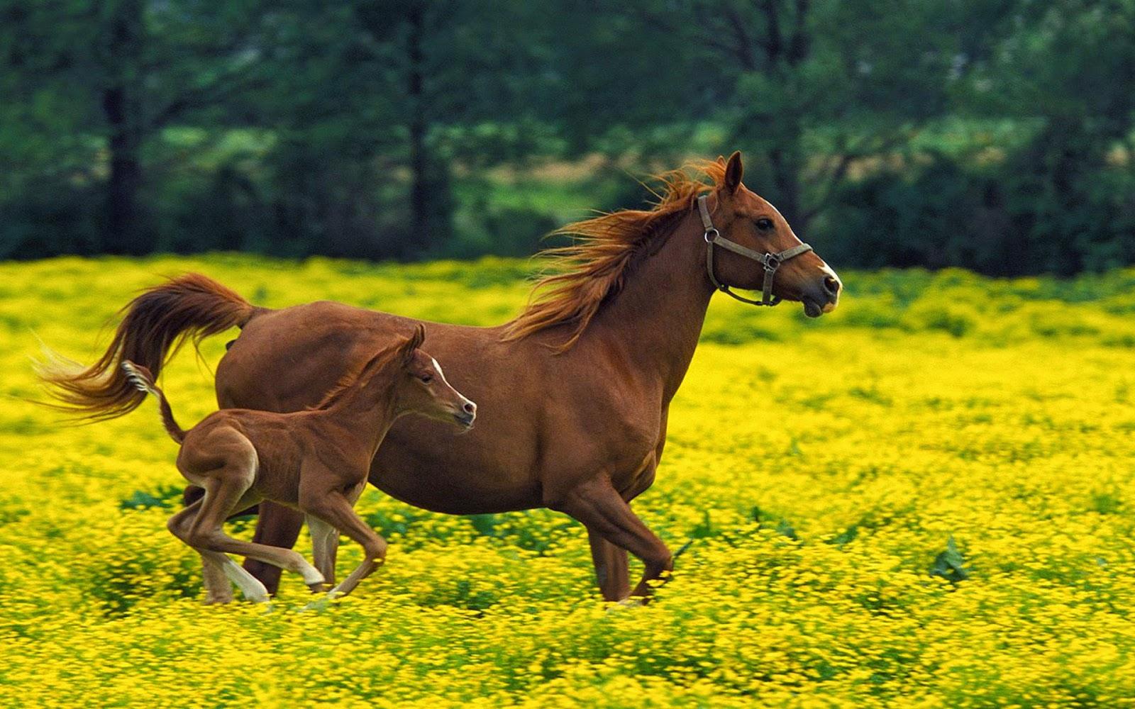 Wonderful   Wallpaper Horse Samsung Galaxy - Horse%2BHD%2BWallpapers%2B(10)  Perfect Image Reference_69532.jpg