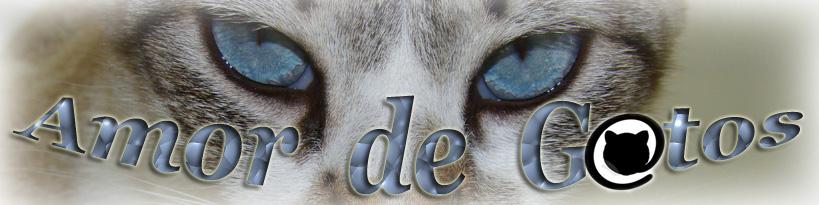 Amor de Gatos