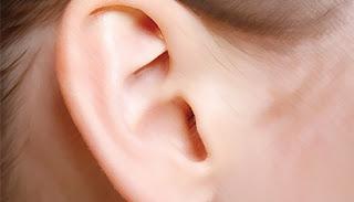 http://2.bp.blogspot.com/-MF4QGeVIicI/TY7n3aoMhgI/AAAAAAAAAEA/MFD4yIhVVQE/s320/telinga.jpeg