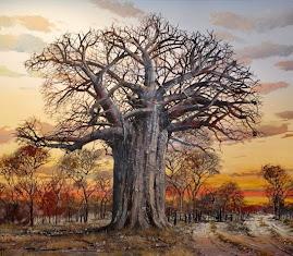 Flora - Imbondeiro - Baoba