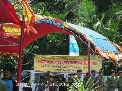Tradisi Panen Raya di Pangkep Sulawesi Selatan