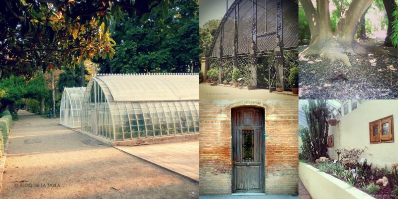 Mis paseos 17 por el jard n bot nico de valencia - Jardin botanico valencia ...