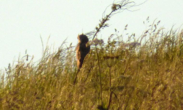 Birding Bradshaw and District