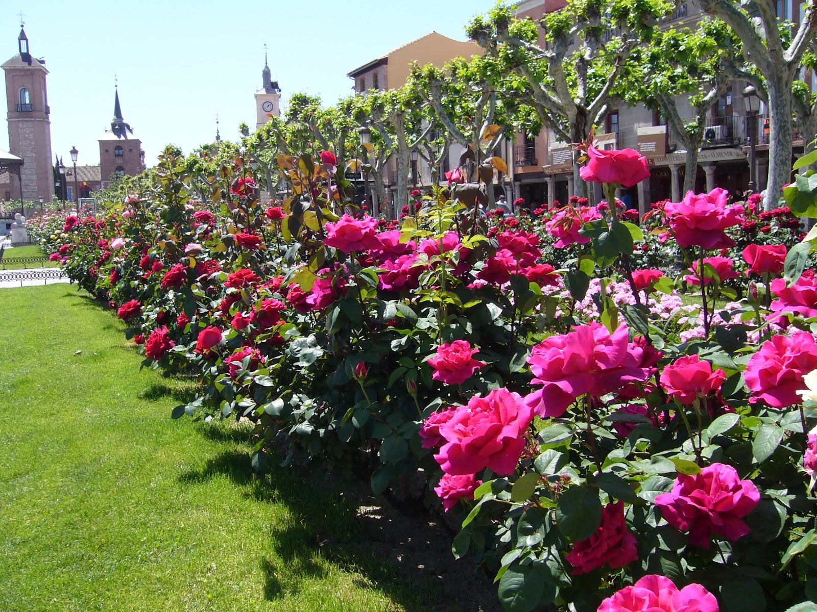 Otra mirada jard n de rosas for Cancion jardin de rosas