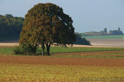 campagne arbre champs automne Seine-et-Marne
