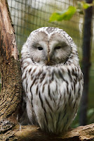 Owl Behavior Personality Type
