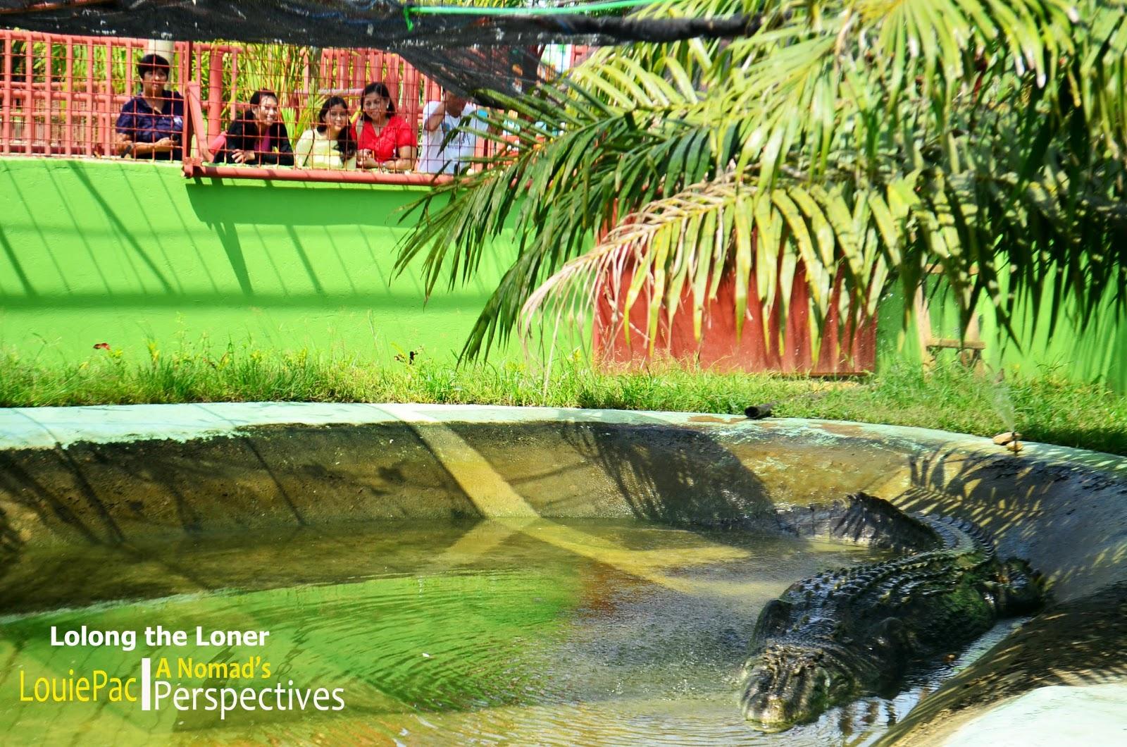 lolong taxidermy lolong preserved crocodile bigger than lolong lolong    Lolong Crocodile Taxidermy
