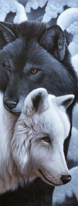 Respeite os Animais♥