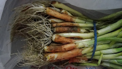 bundle of onion plants
