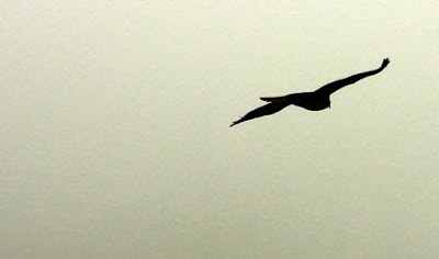 Asturias, buitre en el cielo del Monsacro