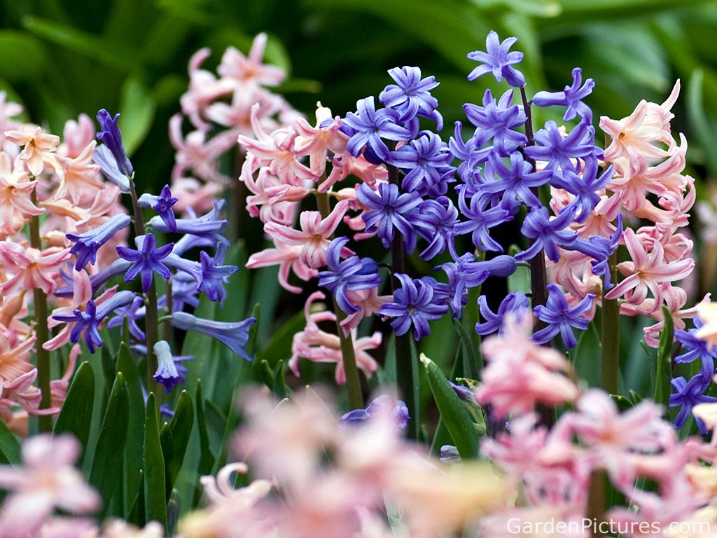 High Res Flower Photo Spring