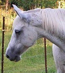 Anti horse slaughter essay