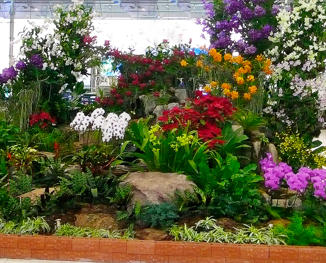 Tropical garden and landscape professionally designed indoor and indoor orchid garden for a public space showing varieties of orchid hybrids and colors with combination of carefully selected indoor plants workwithnaturefo