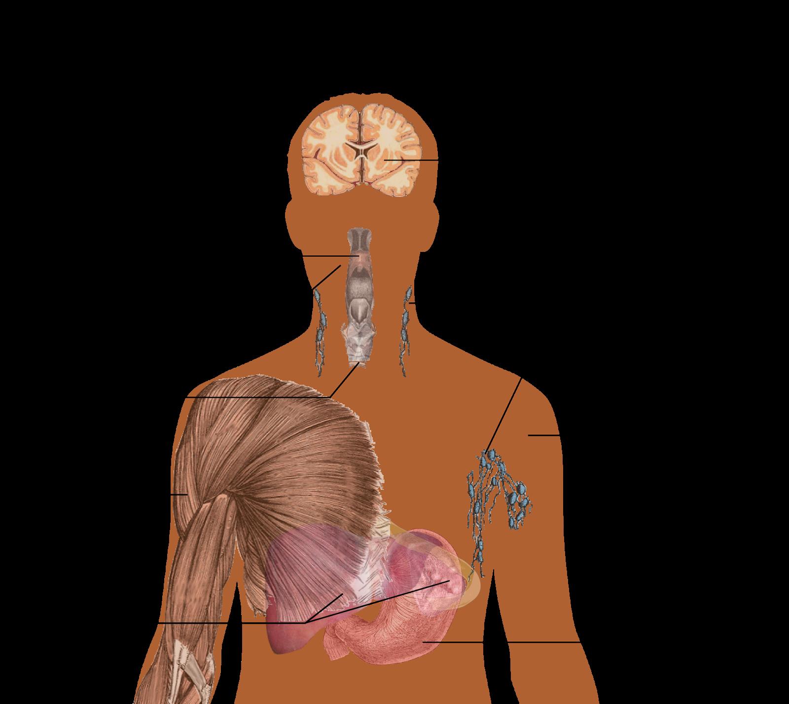 AIDS - எய்ட்ஸ் என்றால் என்ன?  AIDS என்பது Acquired Immune Deficiency Syndrome, இது HIV என்கின்ற வைரசால் ஏற்படுகிறது.   HIV என்பது Human Immuno deficiency Virus. அதாவது மனித இன நோய் எதிர்ப்புக் குறைப்பாட்டு வைரஸ் ஆகும்..   HIV வைரஸ் என்பது நோய் எதிர்ப்பு தன்மையுள்ள செல்களுடன் (Cell) போரிட்டு வென்று விடுகிறது. ஒருமுறை இந்த வைரஸ் நோய் எதிர்ப்பு தன்மையுள்ள செல்களை வென்று உடலுக்குள் புகுந்துவிட்டால் AIDS வியாதி உடலில் விருத்தியடைய 8 முதல் 10 வருடங்கள் வரை ஆகும்.   HIV இருக்கிறதா என்று பரிசோதித்து பார்க்காவிட்டால் இருப்பதே தெரியாது. மற்றவர்களுக்கும் அப்படியே. 8-10 வருடங்களில் இந்த வைரஸ் பரவும்  உங்கள் நோய் எதிர்ப்பு தன்மையை HIV  கிருமி குறைத்துவிட்டால், உங்கள் உடலின் நோய் உங்களை தாக்காமல் தடுக்கும் தன்மை செயலிழந்துவிடும். அதன் பின் மரணம்  ஏற்படலாம்  AIDS ஆபத்தானது. மரணத்தில் தான் முடியும். இதுநாள்வரை இந்நோயைக் குணப்படுத்தும் முறை கண்டுபிடிக்கப் படவில்லை.   HIV எப்படி வருகிறது?  HIV தாக்கப்பட்டவரிடமிருந்து தாக்கப்படாதவருக்கு உடல் திரவங்கள் வழியாக அதாவது குறிப்பாக இரத்தம் அல்லது விந்து வழியாகப் பரவுகிறது.  பாதிக்கப்பட்டவரிடமிருந்து பாதிக்கப்படாதவருக்கு இரு வழிகளில் இரத்தம் மூலம் பரவலாம். ஒன்று இரத்ததானம் வழங்குவதன் மூலமும் அல்லது நோயாளிக்கு மருந்து செலுத்திய ஊசியைக் கொண்டு உடனடியாக மற்றுமொரு பாதிக்கப்படாதவருக்கு மருந்து செலுத்தும் போதும் ஆகும்.   இரத்த தானத்தின் போது வழங்குபவரின் இரத்ததில் HIV இல்லை என்பதை உறுதி செய்து கொள்ள வேண்டும். ஊசி போட்டுக்கொள்ளும்போது புதிய ஊசியை உபயோகிக்கிறார்களா என்பதை உறுதி செய்து கொள்ள வேண்டும்.  வேறு விதமாகவும் இரத்தம் மூலம் HIV பரவுகிறது. வெளிப்புறக் காயங்களின் மூலம் பாதிக்கப்பட்டவரின் இரத்தம் பாதிக்கப்படாதவருக்கும் பரவும்.  பாலியல் உறவு மூலம் பாதிக்கப்பட்டவரின் விந்து பாதிக்கப்படாதவருக்கு பரவும்.  இதுதான் HIV பரவும் இருவழி.. உடலுக்கு வெளியே இந்த வைரஸ் நீண்ட நேரம் உயிர்வாழாது. அதனால் கழிவிடங்கள், கட்டியணைத்தல், முத்தமிடல், கைகளைத் தழுவுதல் மூலம் நோயால் பீடிக்கப்பட்டவரிடமிருந்து பாதிக்கப்படாதவருக்கு நோய் பரவாது. நீச்சல் குளங்களில் குளிப்பதாலும் கொசு கடிப்பதாலும் பரவாது.   உடல் திரவங்கள் – Body Fluids என்றால் என்ன? உடல் திரவங்கள் என்று குறிப்பிட