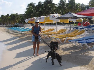 Nan walking George (out front) and Bruno on the beach in Isla Mujeres