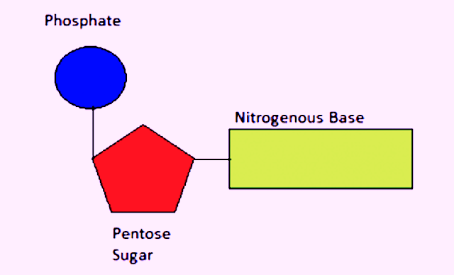 Dna structure 4 bases of dating 9