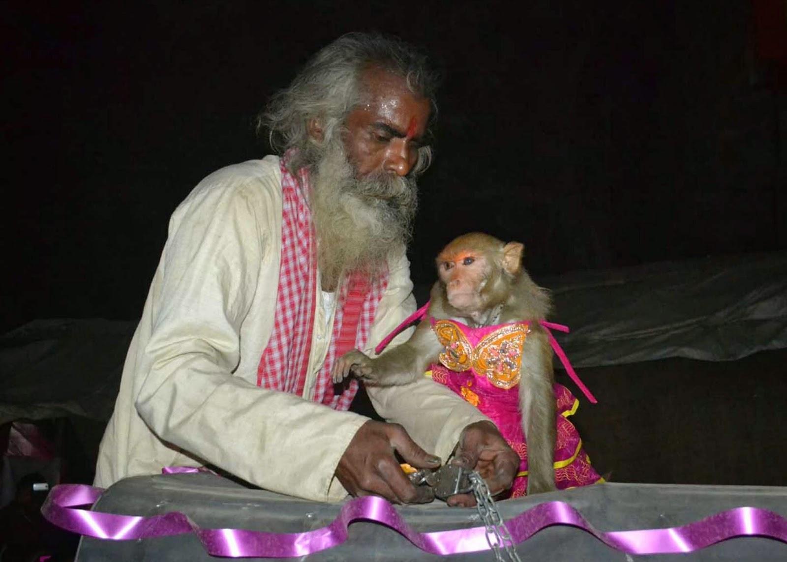 Pernikahan Monyet Di India