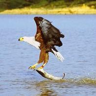 aguia   1