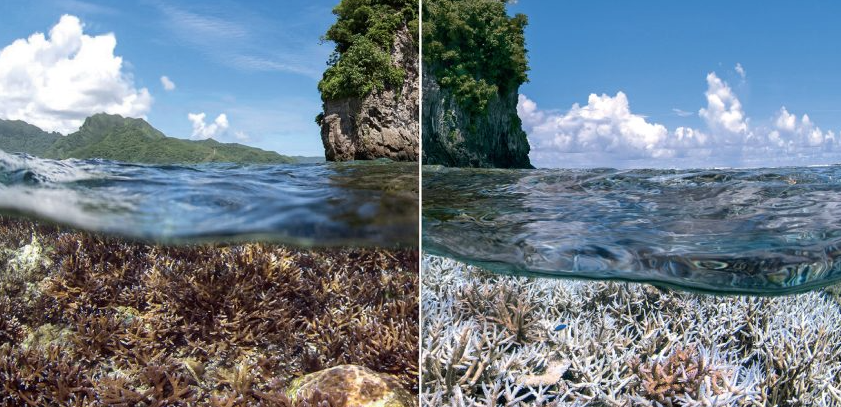 WHAT HAPPENS TO CAIRNS WHEN THE REEF DIES?