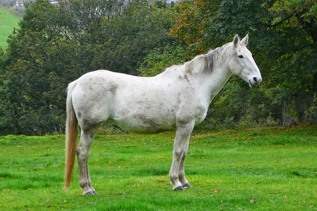 Genetic engineers succeed unicorn without a horn - clone