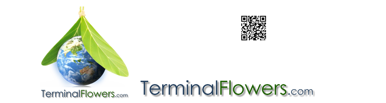TerminalFlowers