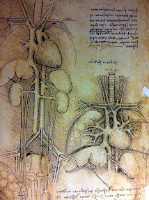 Leonardo's drawing of heart and lungs