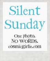 http://www.cosmicgirlie.com/2013/11/10/silent-sunday-37/
