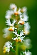 Flora Terrestre