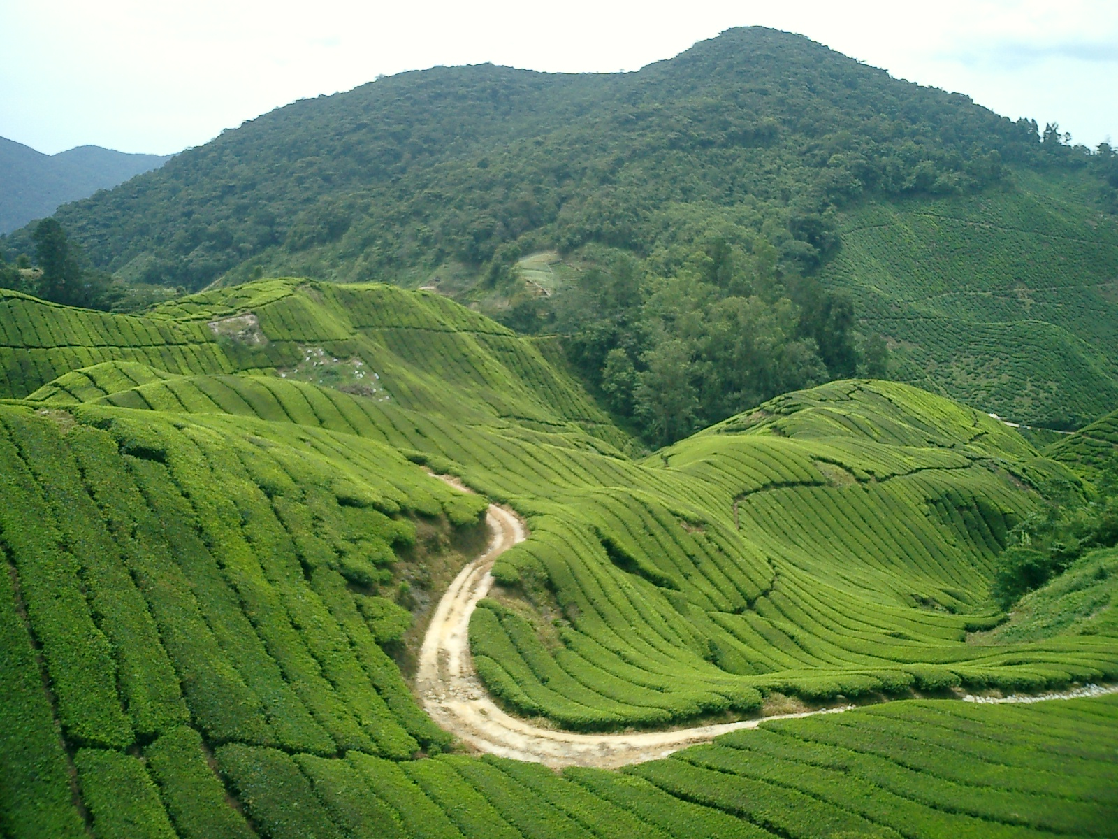 Malaysia Attractions f...