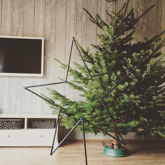 Grinsestern, weihnachten, baum, Christbaum,