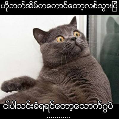 EPIC CAT MEMES By Mg Linnith