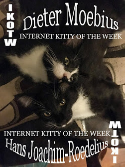 INTERNET KITTIES OF THE WEEK