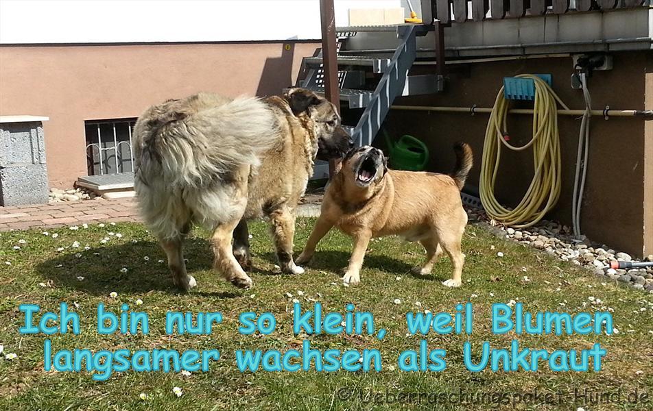 Deutsche Doggen von der Gästebuch - Lustige Bilder Deutsche Dogge