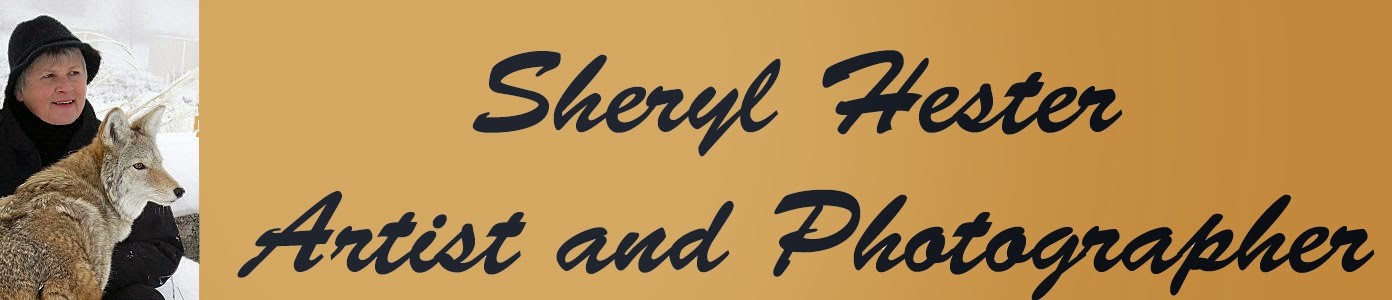 Sheryl Hester Fine Artist