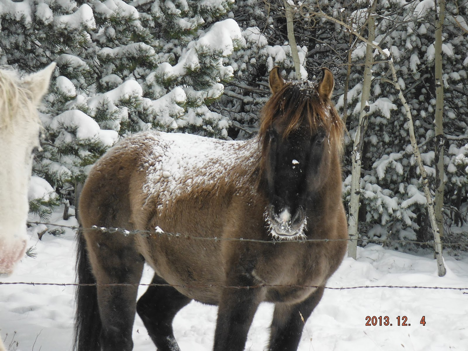Good   Wallpaper Horse Winter - December+2013+017  Snapshot_545458.JPG