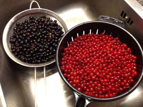 red currants, black currants, röda vinbär, svarta vinbär