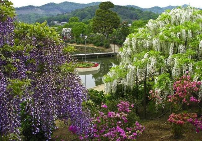 شلالات الزهور اليابانية Water_Fall_Flowers_Japan_14.jpg