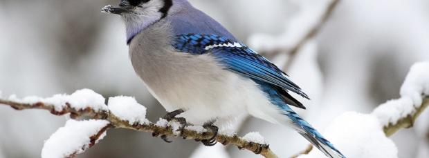 guzel kus facebook kapak resimleri 35 En Güzel Facebook Kuş Kapak Resimleri indir