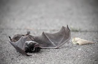 telo mrtvega angela │ na pragu trgovine │ samo da ni ptica