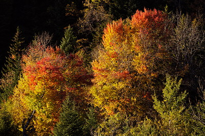 Image of autumn light on the foliage
