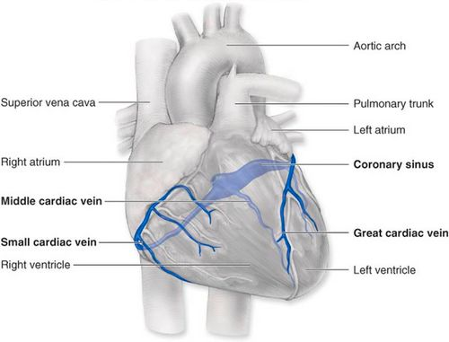Cardiac veins anatomy