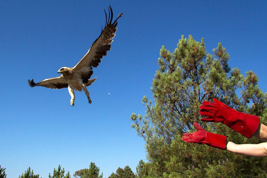 Outros Centros de Recuperação de Fauna Selvagem em Portugal!